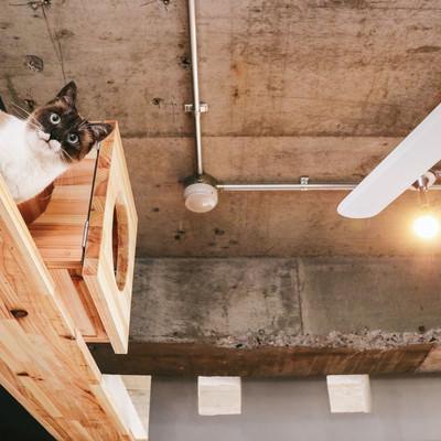「猫ぐらし」の写真素材