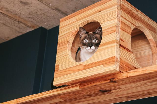 キャットボックスから警戒する猫の写真