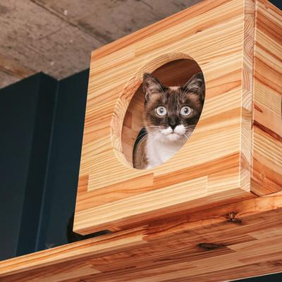 「キャットボックスから警戒する猫」の写真素材