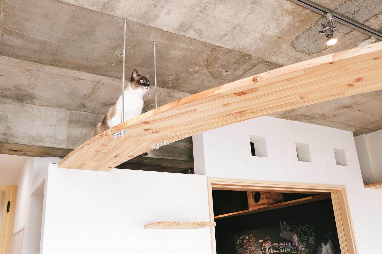 「猫への思いやりがつまったキャットウォークがある家猫への思いやりがつまったキャットウォークがある家」のフリー写真素材を拡大