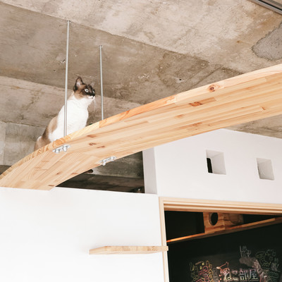 「猫への思いやりがつまったキャットウォークがある家」の写真素材