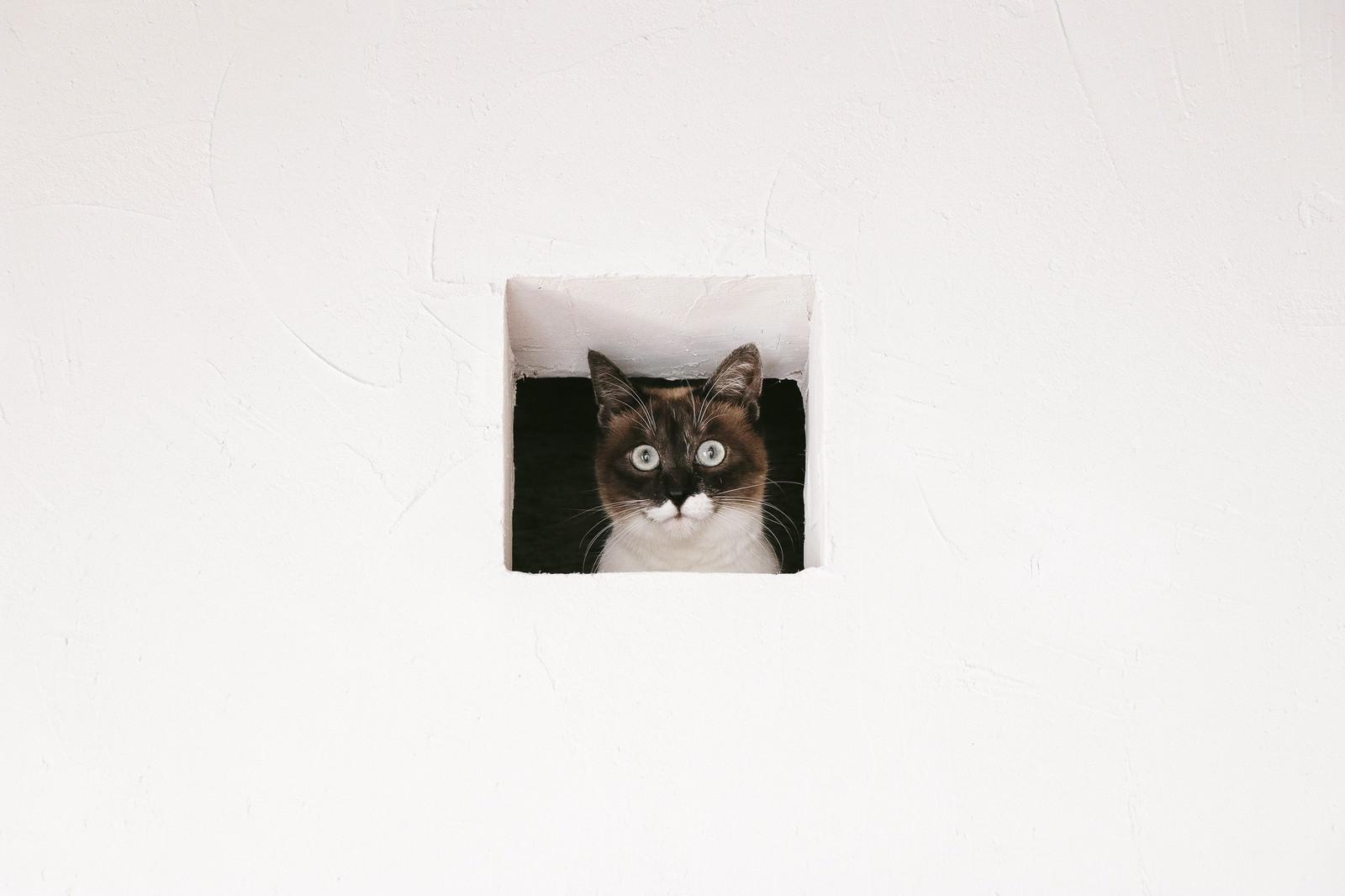 「猫は見た!猫は見た!」のフリー写真素材を拡大