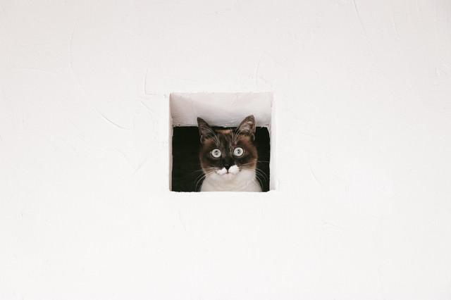 猫は見た!の写真