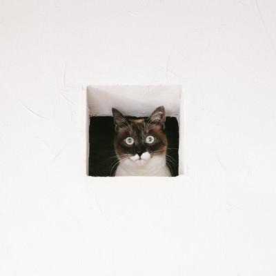 「猫は見た!」の写真素材