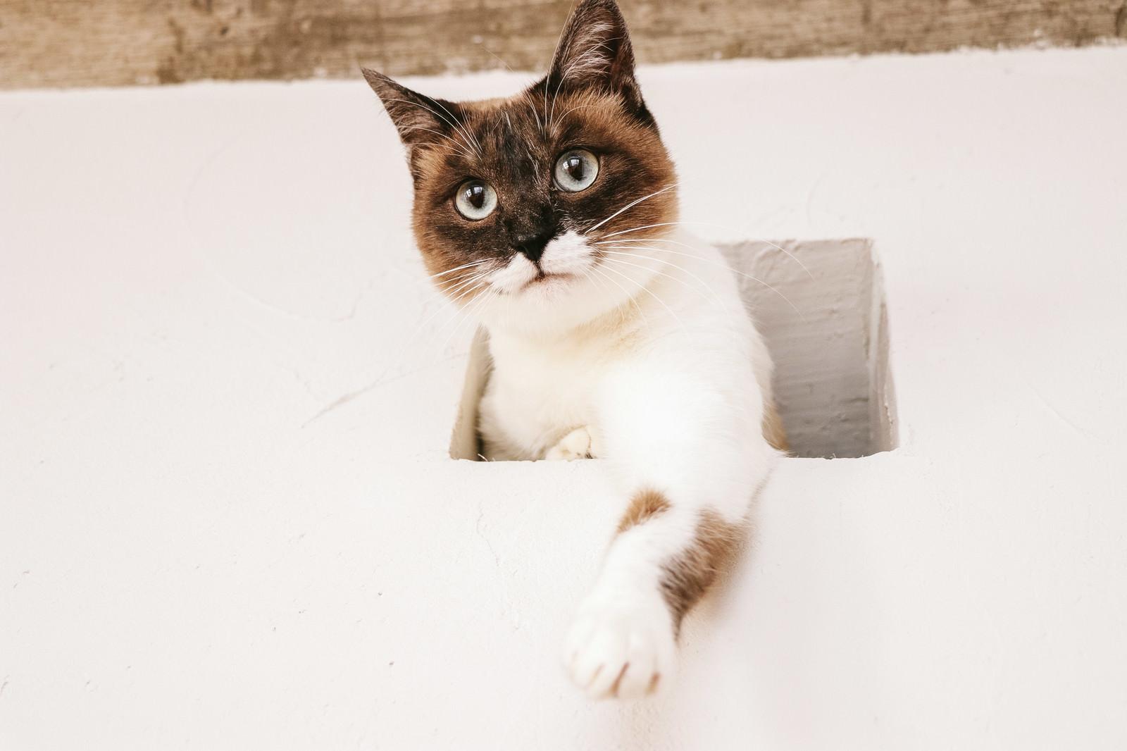 「水槽のさかなを高位置から狙う猫」の写真