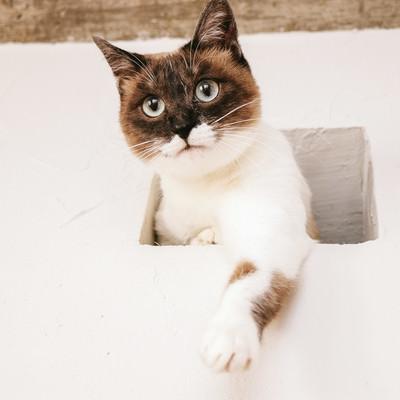 「水槽のさかなを高位置から狙う猫」の写真素材