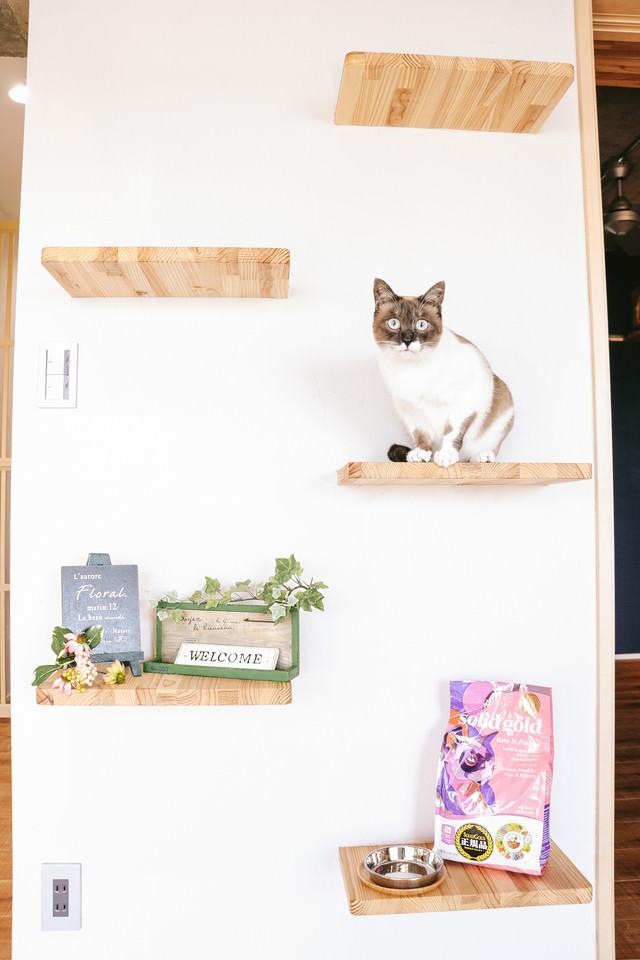 キャットステップと猫の写真