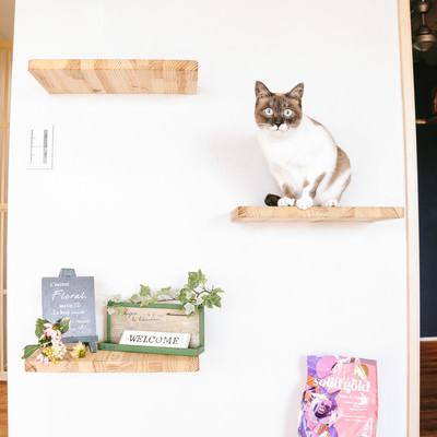 「キャットステップと猫」の写真素材