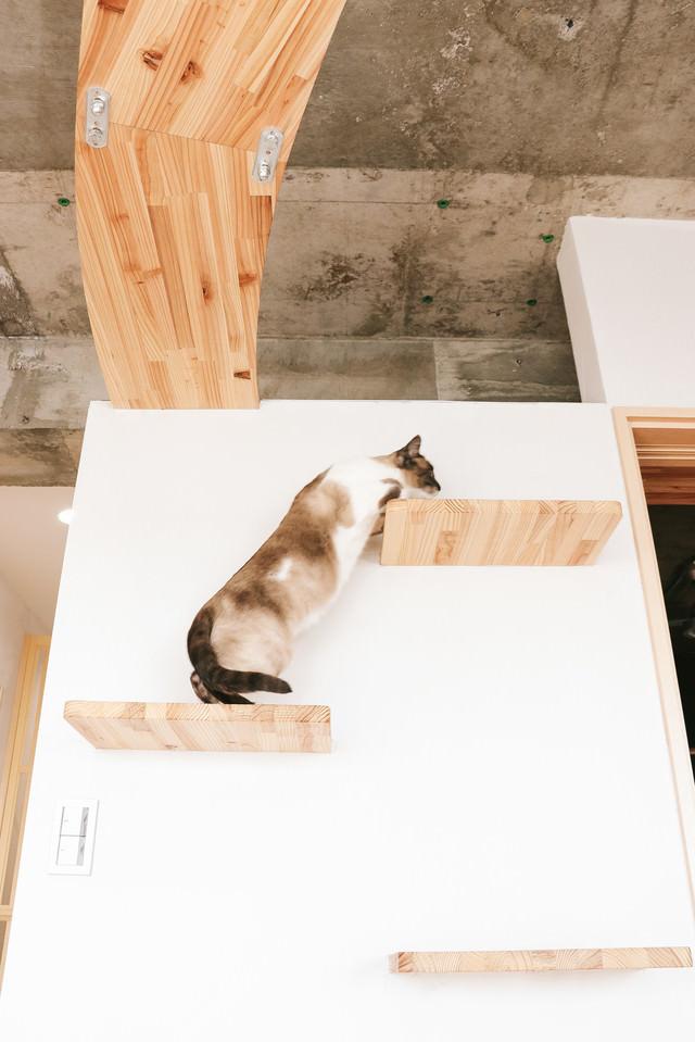 キャットステップを登る猫の写真