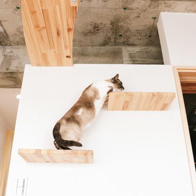 「キャットステップを登る猫」の写真素材