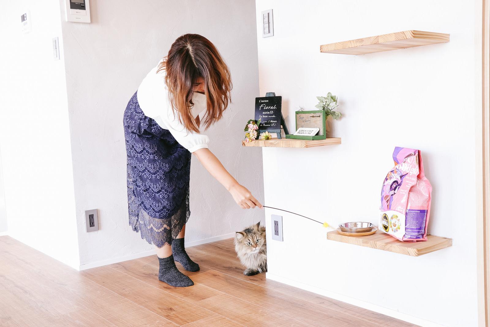 「猫じゃらしで興味をひかせる猫じゃらしで興味をひかせる」のフリー写真素材を拡大