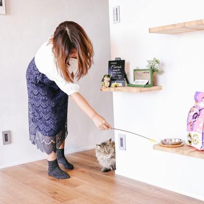 「猫じゃらしで興味をひかせる」の写真素材