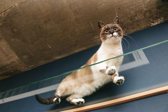 猫の肉球が丸見えの写真