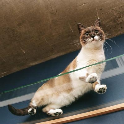 「猫の肉球が丸見え」の写真素材