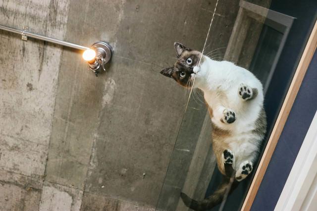 猫と暮らす肉球ビュー(透明アクリル)の写真