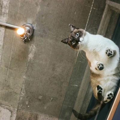 「猫と暮らす肉球ビュー(透明アクリル)」の写真素材