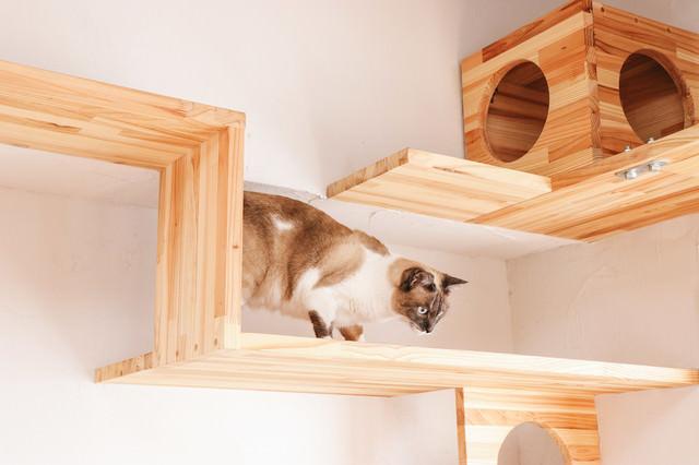 キャットステップを下りる猫の写真