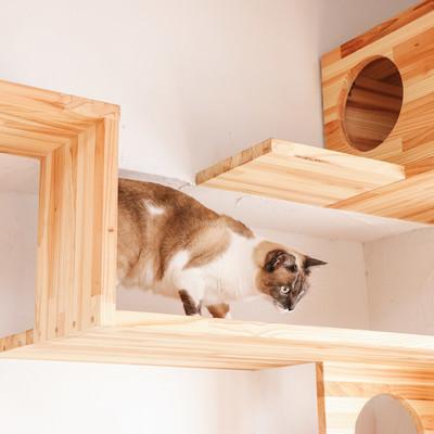 「キャットステップを下りる猫」の写真素材