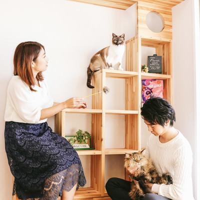 「猫と暮らす家(恋人との同棲)」の写真素材