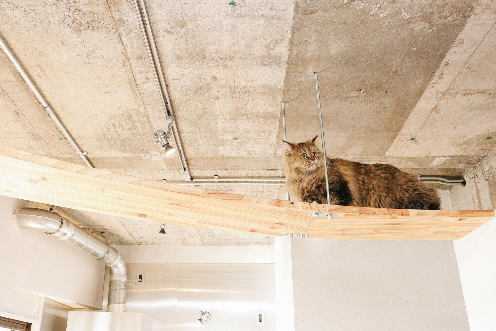 「ちょっと猫が通りますよ・・・」の写真