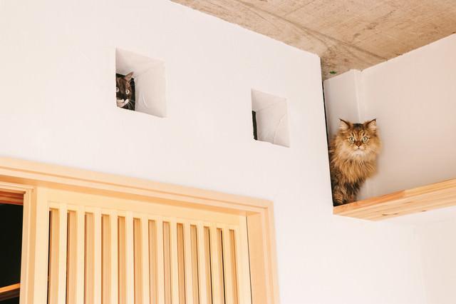 いたずらがバレた時の猫の表情を御覧くださいの写真