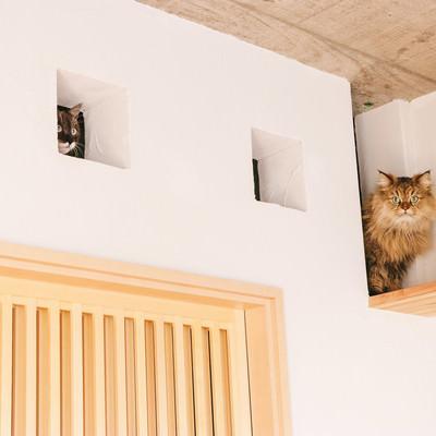 「いたずらがバレた時の猫の表情を御覧ください」の写真素材