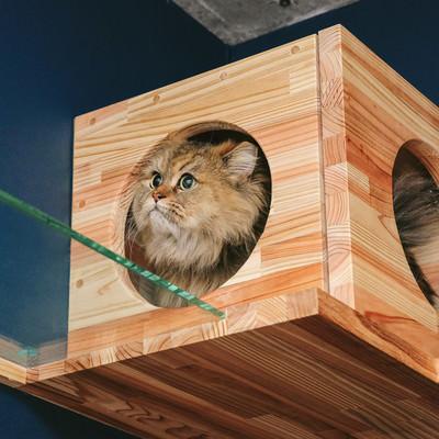 「キャットボックスを気に入ったペルシャ猫」の写真素材