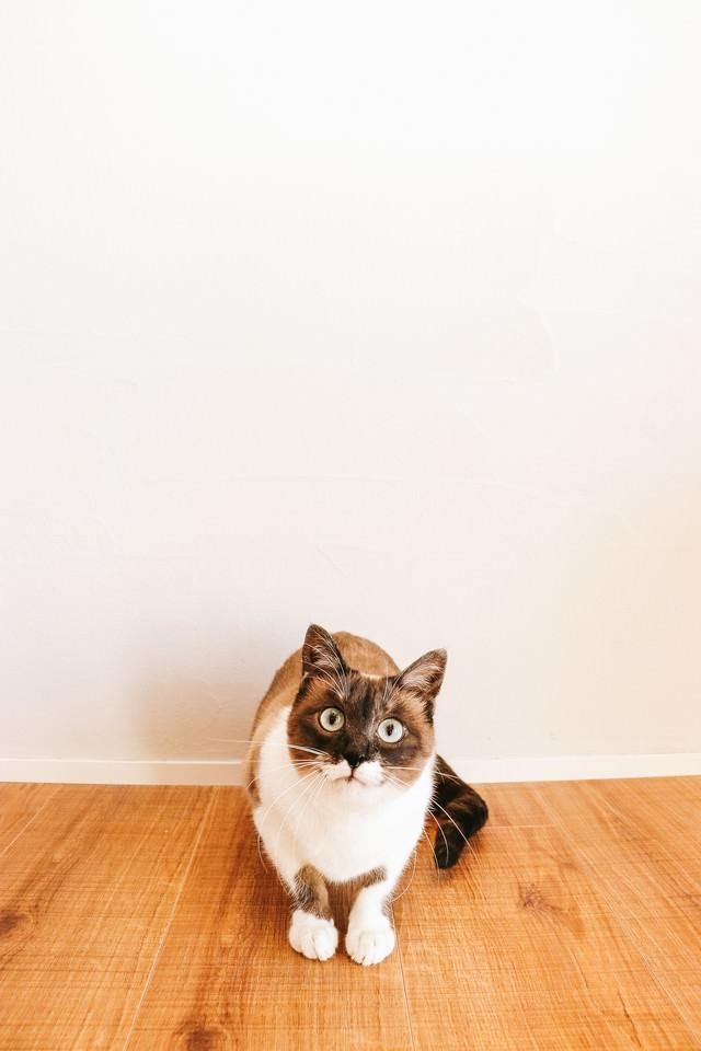 猫とのくらしの写真