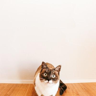 「猫とのくらし」の写真素材