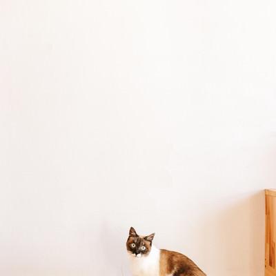 「ねこがいる生活」の写真素材