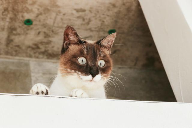 屋根裏にゃんこの写真