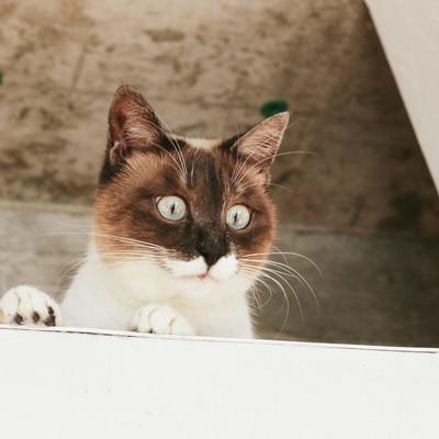 「屋根裏にゃんこ」の写真素材