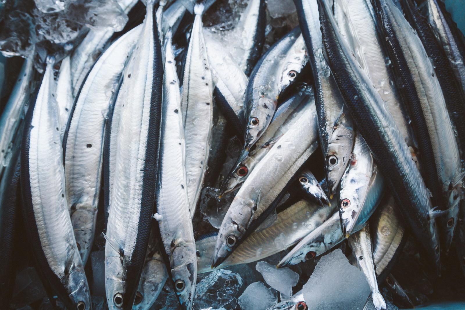 「朝市の秋刀魚朝市の秋刀魚」のフリー写真素材を拡大