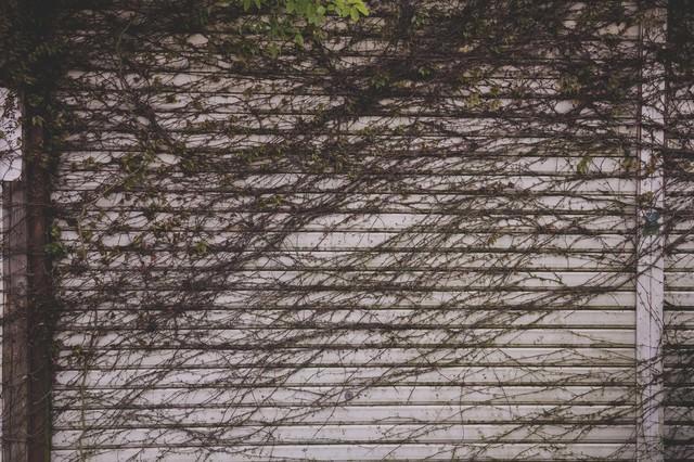 蔦が生えたシャッターの写真