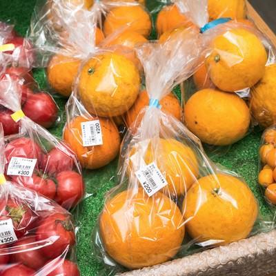 「採れたてのいすみ市大原産のミニトマトとみかん」の写真素材