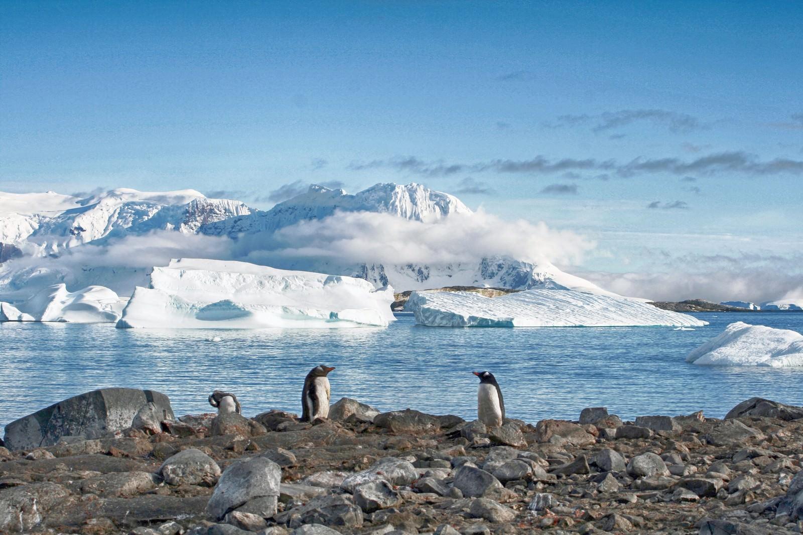 「クーパービル島からの景色(ペンギン)」の写真