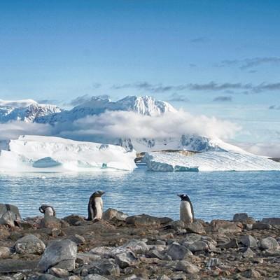 クーパービル島からの景色(ペンギン)の写真