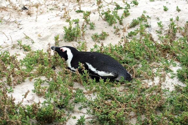 浜辺とペンギンの写真
