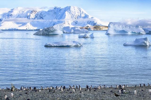 クーパービル島からのペンギンの群れの写真