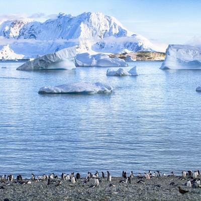 「クーパービル島からのペンギンの群れ」の写真素材