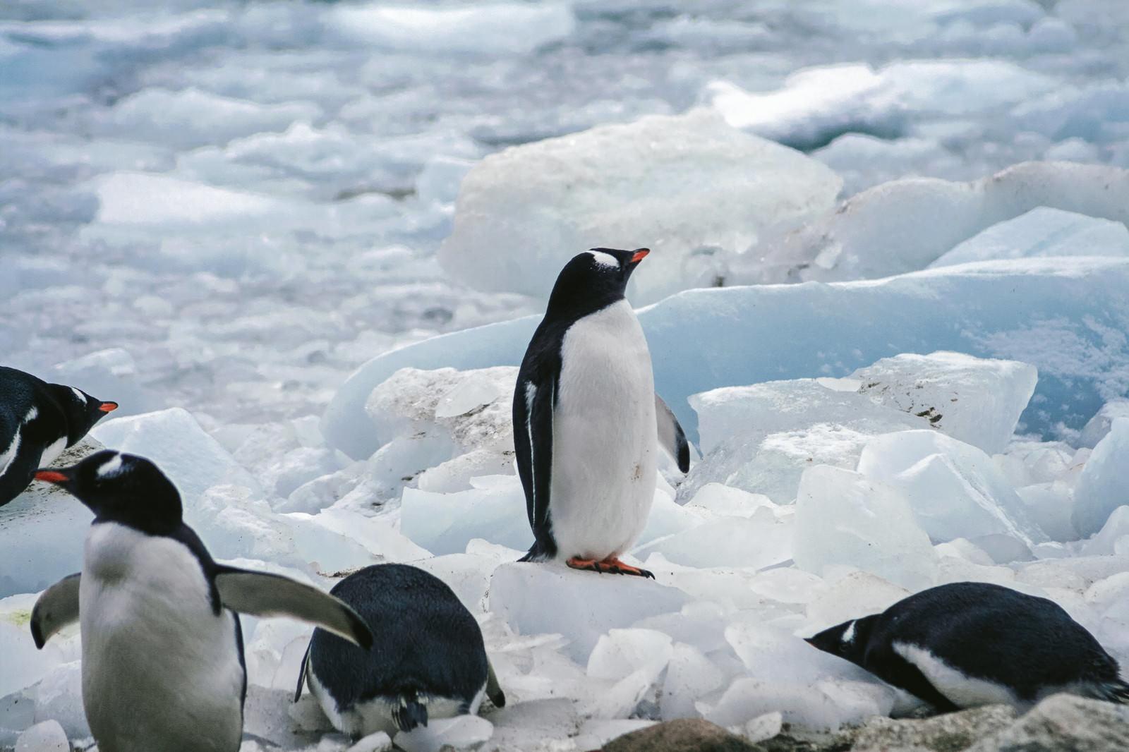 「フリー素材 ペンギン」の画像検索結果