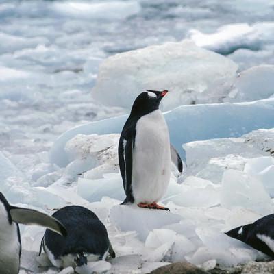 将来が不安なペンギンの写真