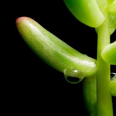 「多肉植物と水滴」の写真素材