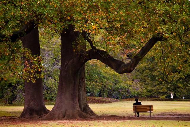 大きな樹木の下でくつろぐサラリーマンの写真