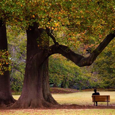 「大きな樹木の下でくつろぐサラリーマン」の写真素材