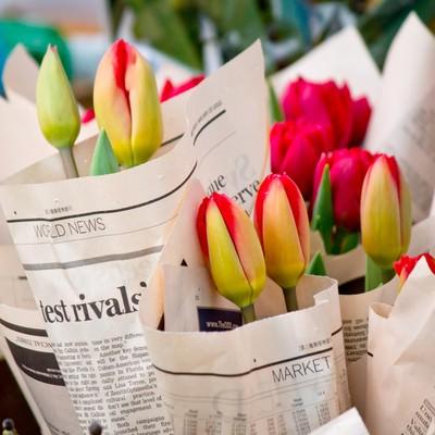 「英文の新聞に包まれた花」の写真素材