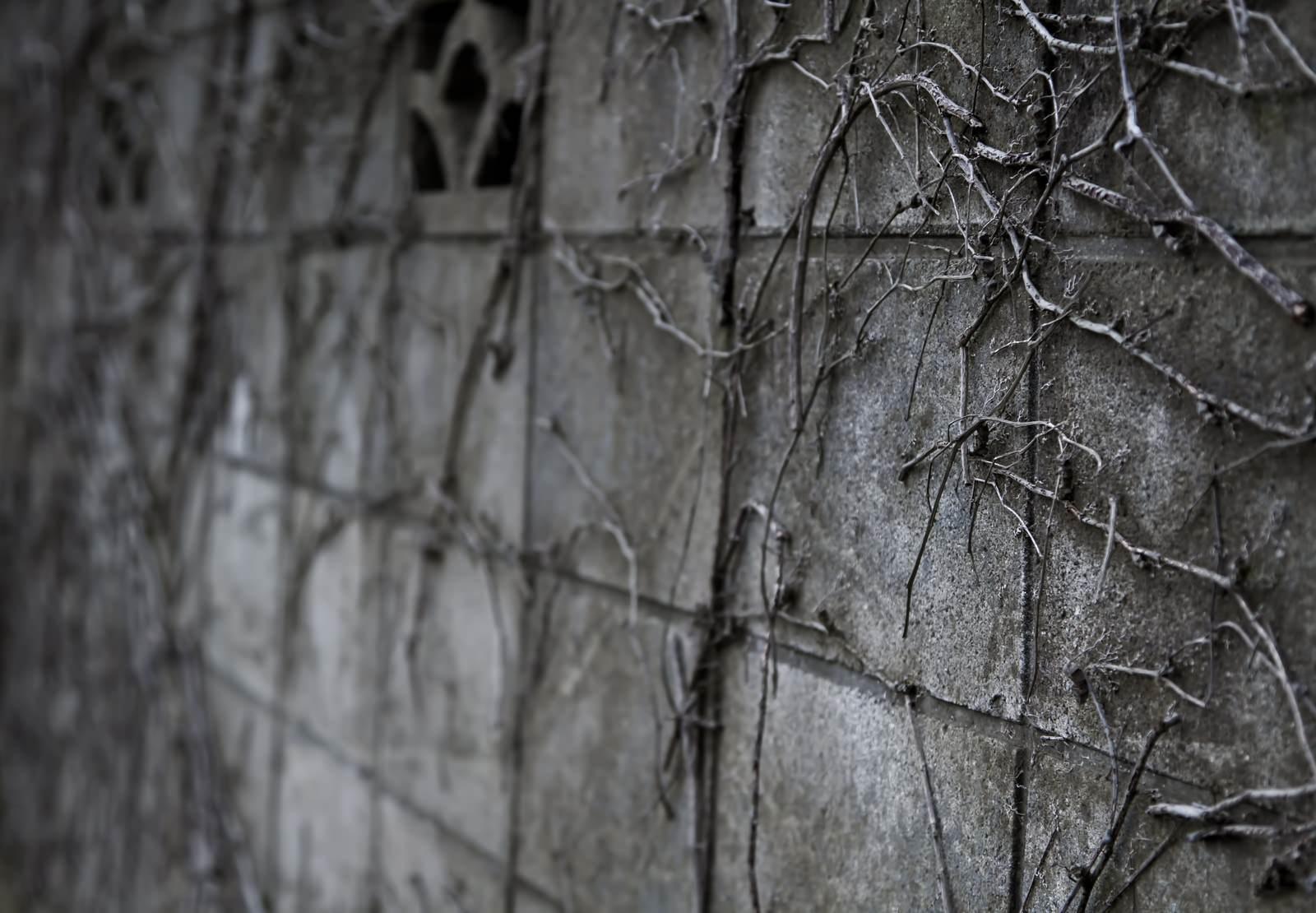 「ツタが這うブロック塀」の写真