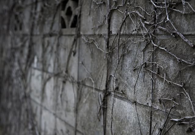 ツタが這うブロック塀の写真