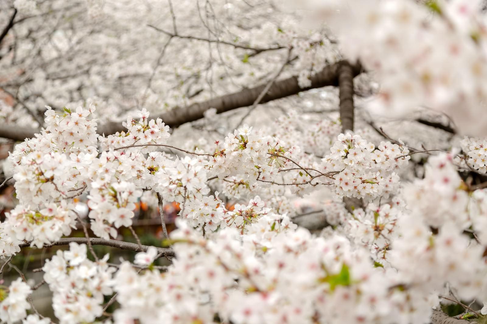 「春の始まり春の始まり」のフリー写真素材を拡大