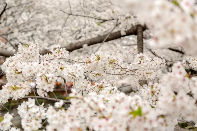 春の始まりの写真